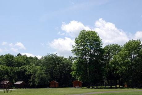 日高沙流川オートキャンプ場のサイトと森