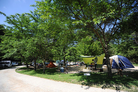 自然の森ファミリーオートキャンプ場のサイトの様子