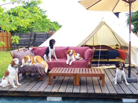 ドッグフリーサイトグランピングにいる犬たち