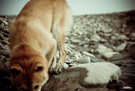 河原を歩く野生動物