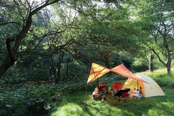 緑豊かな自然の中に張られたテントとタープ