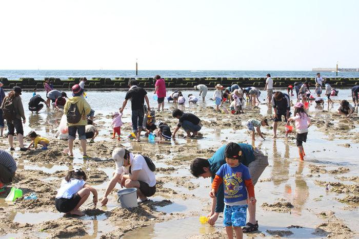二色の浜海水浴場で潮干狩りを楽しむ人々