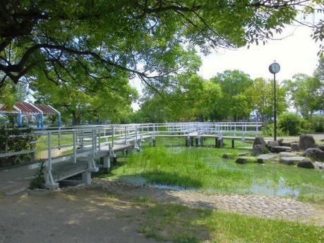 緑豊かな舟渡池公園