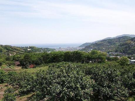 緑の生い茂る幕山