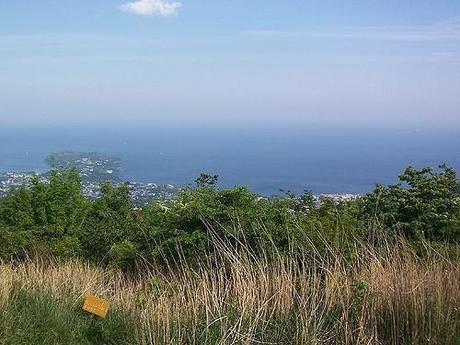 幕山から見える一面に海の広がる景色
