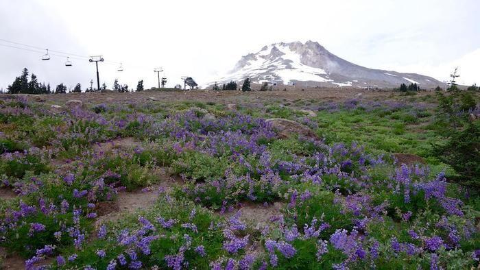 一面を紫に彩るワイルドフラワー