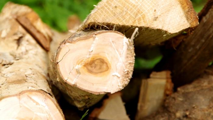 薪の切断面の写真