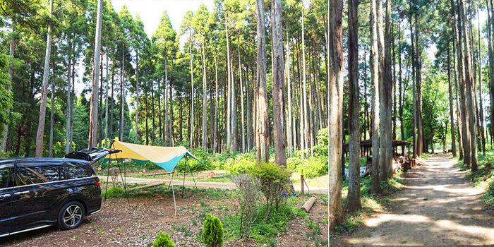 昭和の森フォレストヴィレッジでのキャンプの様子