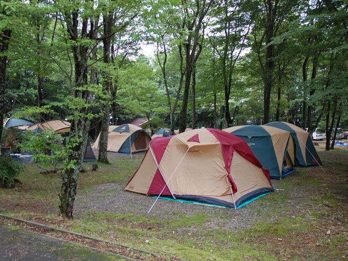 チャウシカノ森キャンプ場でのキャンプの様子