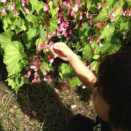 キャンプ場内で可愛い花を触る少年
