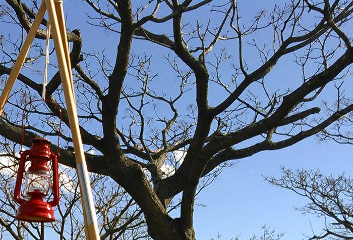 青空の下、気に吊り下げられたランタン