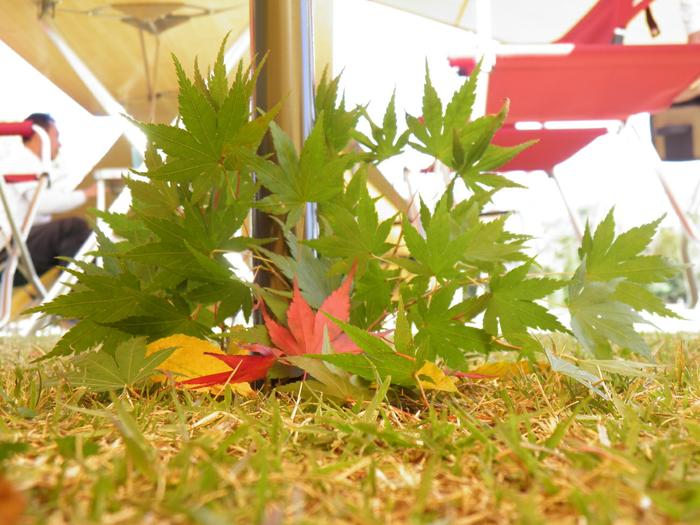 タープの足元に落ちた紅葉した紅葉