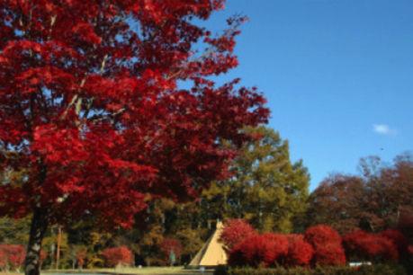 美鈴湖もりの国オートキャンプ場の紅葉