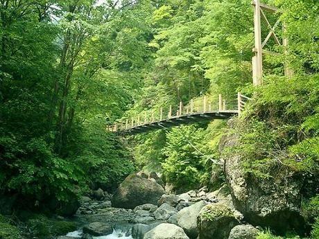 大柳川渓流公園 キャンプ場