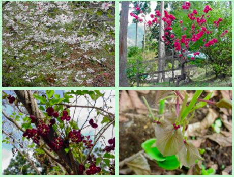 花の森オートキャンピアで楽しむことのできる花々