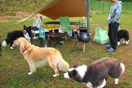 星降るWAN-WAキャンプ場でくつろぐ犬たち