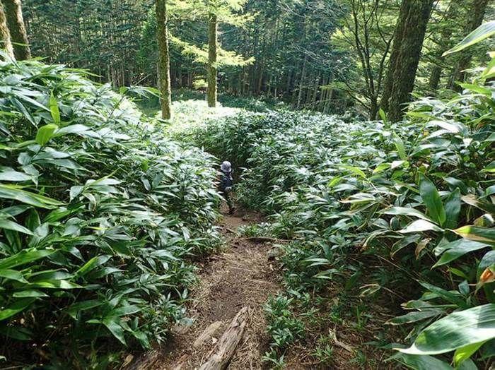笹薮の道を歩く親子の後ろ姿