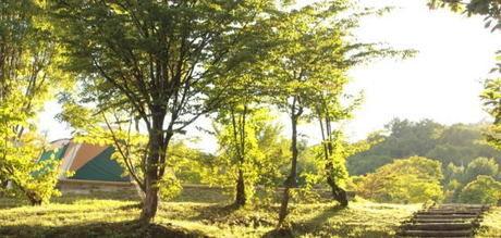 恩原高原オートキャンプ場の綺麗な緑の自然の写真