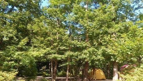メープル那須高原キャンプグランドの林間サイト