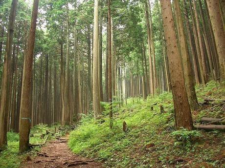 木々の生い茂る山道