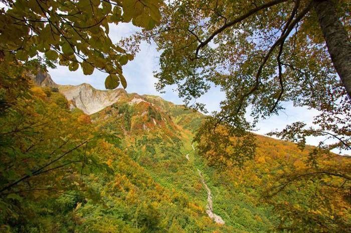 紅葉が生い茂る山の写真
