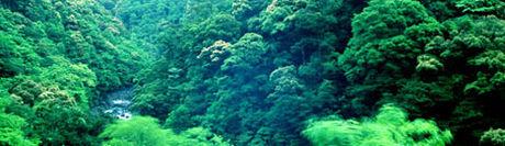 古法華自然公園キャンプ場の様子