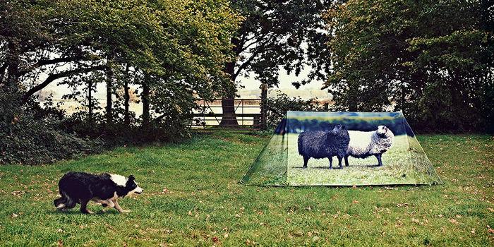 風景と一体化した羊がプリントされたテント