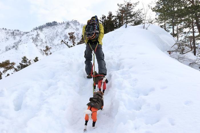 犬と共に雪山を歩く人