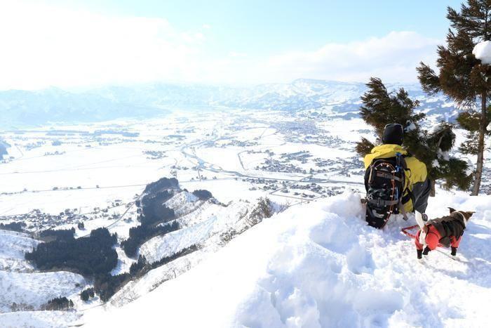 雪山の山頂から街を眺める人とその横にいる犬