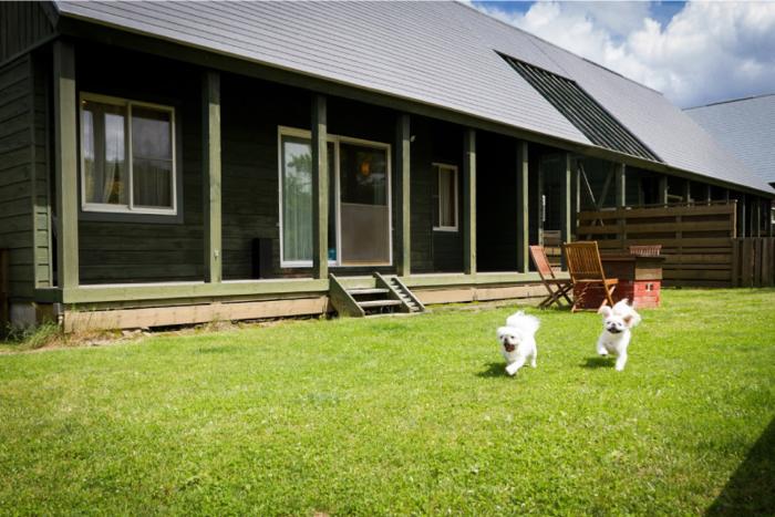 コテージとその庭で走り回る白い犬