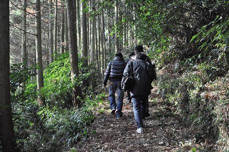 木立の中のハイキングロードを歩く人々の後ろ姿