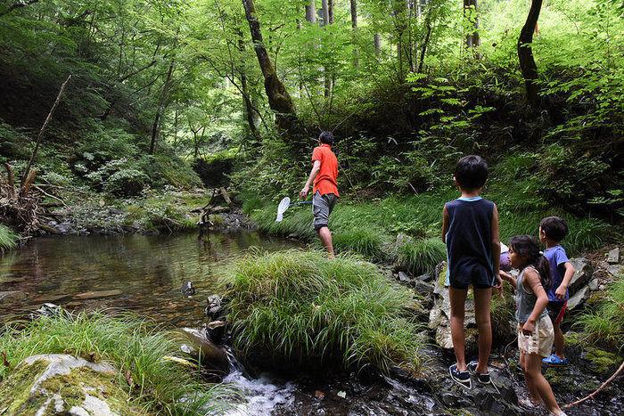 川辺で虫取りをして遊ぶ子供達