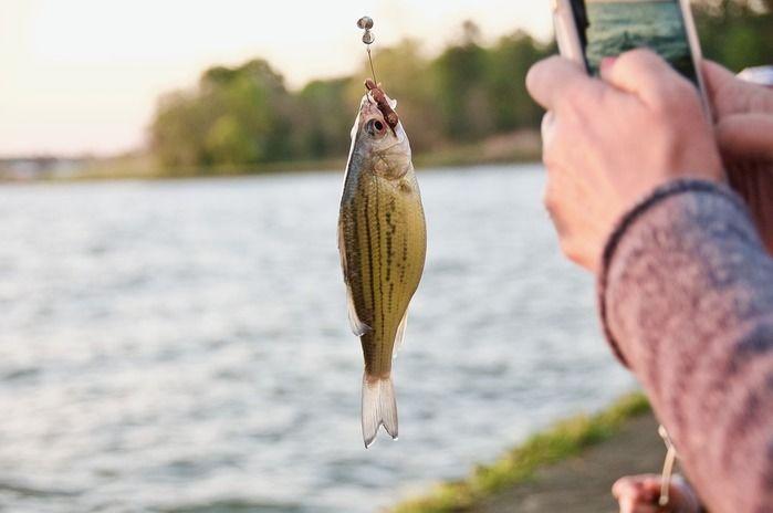 釣った魚を写真で撮る様子