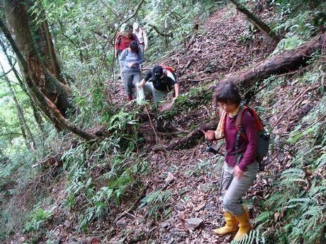 草の生い茂る山道ハイキングの様子