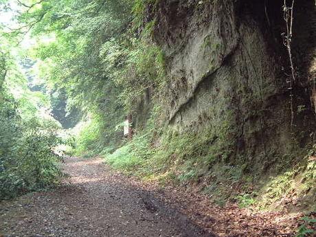 朝比奈切通しハイキングコースの山道