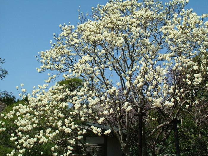 祇園山ハイキングコースの花