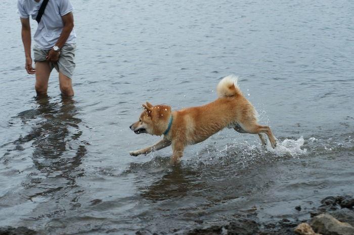 湖で遊ぶ犬