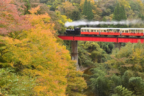 紅葉の中の鉄橋を渡る小湊鐵道
