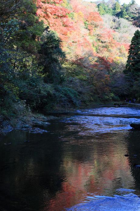 養老渓谷から見上げる紅葉