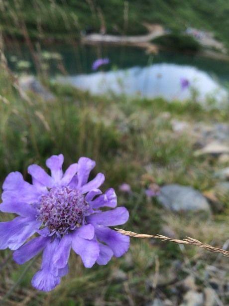 紫色の美しい山野草