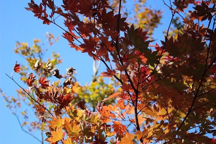 空を背景に下から見上げる紅葉