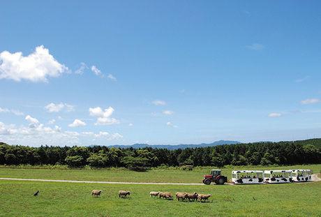 マザー牧場の風景