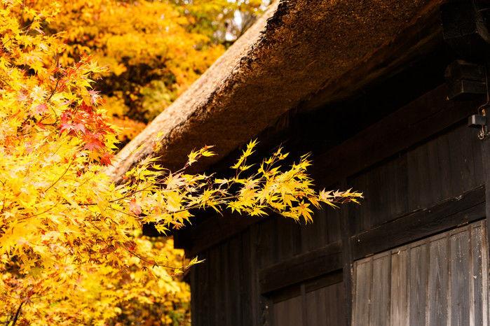 筑波山ホテル青木屋の紅葉