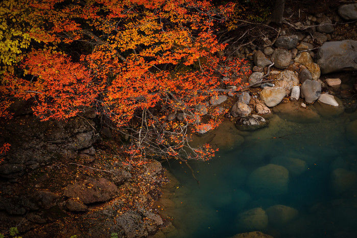 池の映る紅葉