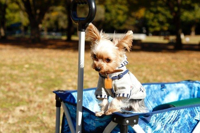 キャリーカートに犬を乗せて