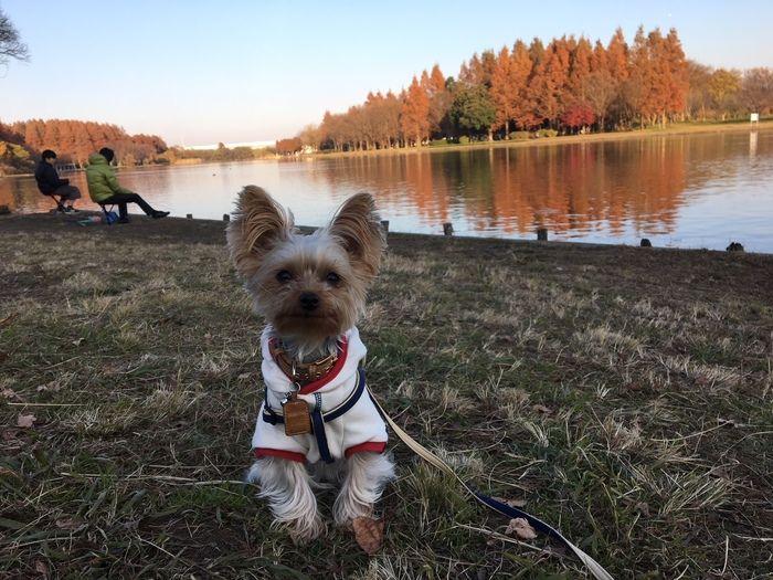 湖畔でポーズをとるわんこ