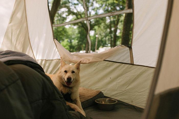 テントの中でくつろぐ犬