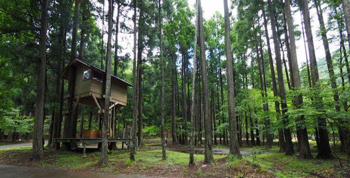 林の中のツリーハウス風コテージ