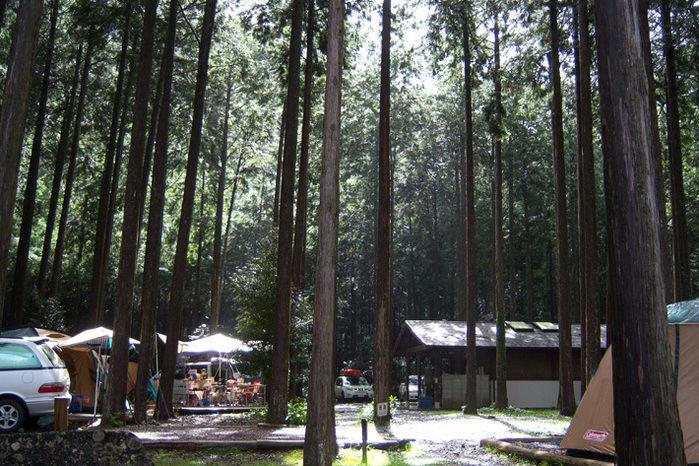 ヒノキ林の林間サイト