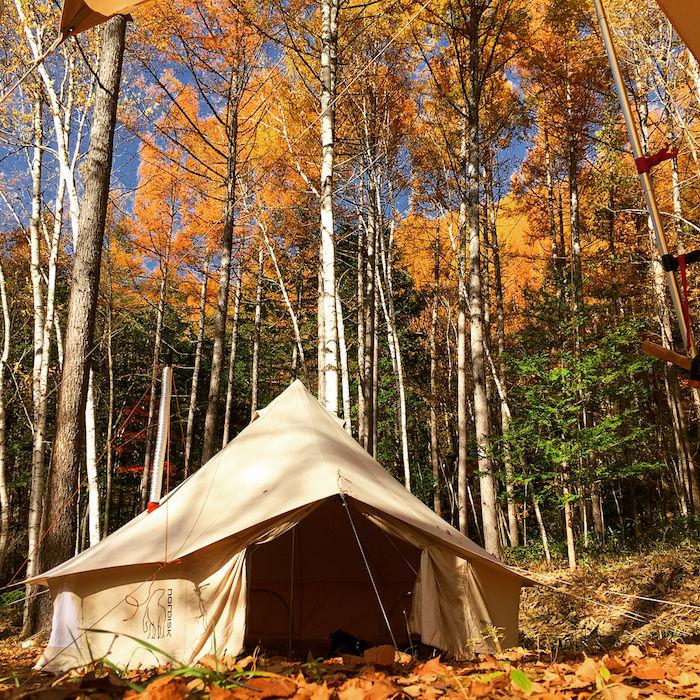 森で落ち葉に囲まれるアスガルド